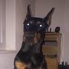Roxxy's picture
