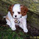 The was picture taken by the breeder
