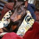 Beck in Blanket
