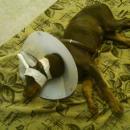 Sasha Resting Peacefully at Home