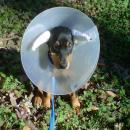 newtodogs's photo